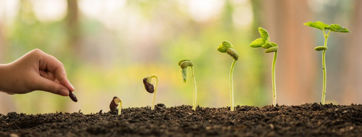 Nachhaltigkeit in der Eventbranche - Bäume pflanzen